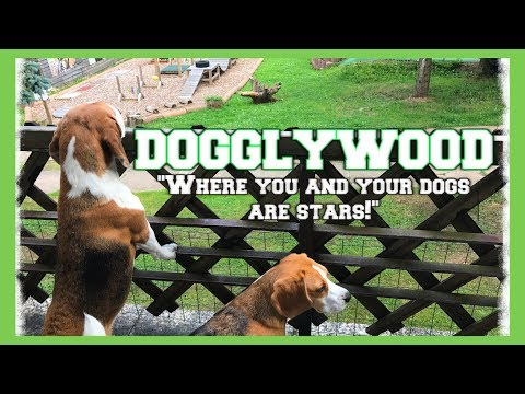 DOGGLYWOOD : The Best Vacation For EVERY Dog Owner! Cute Dogs Louie & Marie