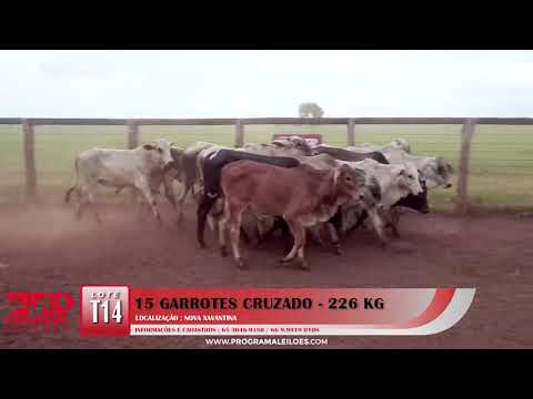 LOTE T14