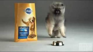 cutest dogs evar pedigree ad commercial schoenste werbung mit hunden