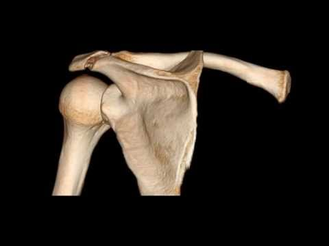fracture of acromion process of the scapula - youtube, Human Body