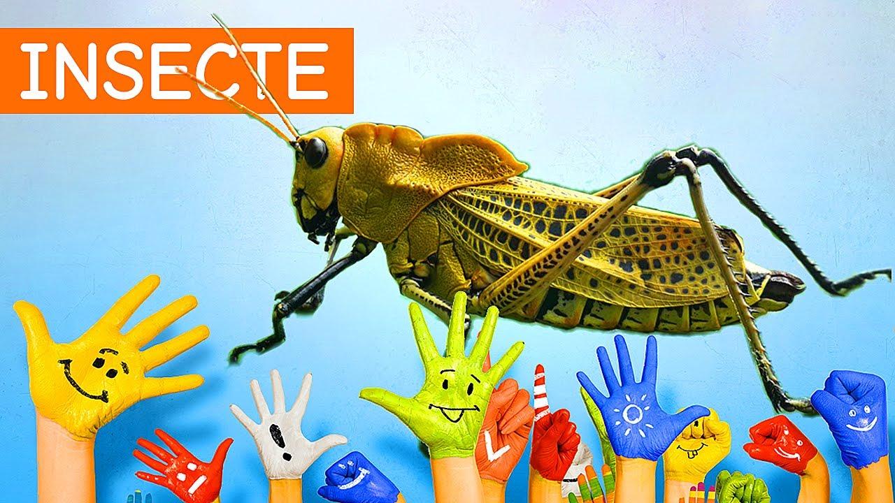 Ușor respingător de insecte, Înregistrează-te pentru ştirile noastre