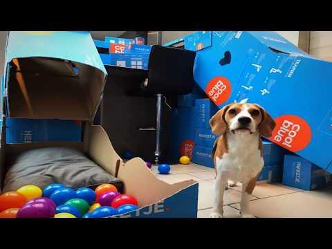 DIY DOG AGILITY COURSE WITH CARDBOARD | BEAGLE UNIVERSE