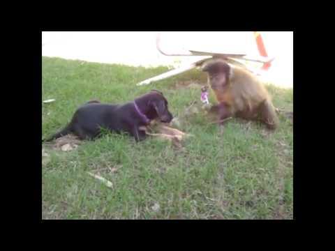 Monkey and dog fail to share a lollipop