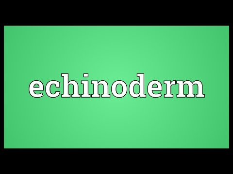Echinoderm Meaning