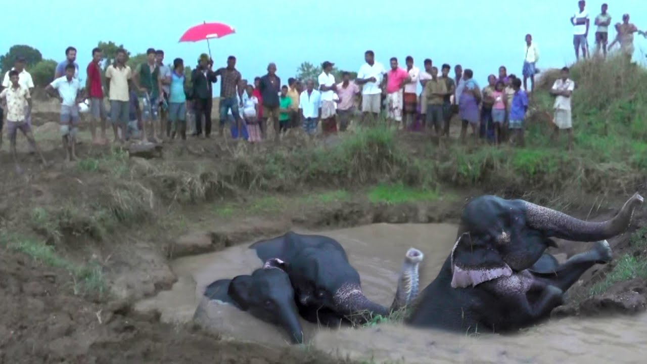 This elephant family rescued from well by wildlife officers.