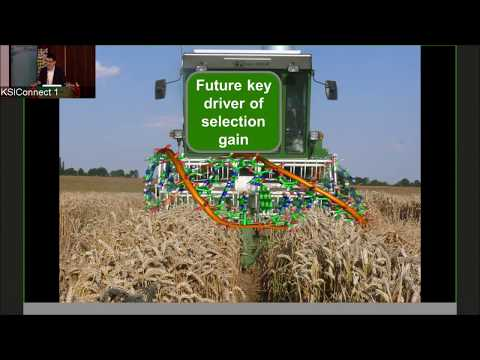 Using genomics to boost wheat grain by Jochen Reif