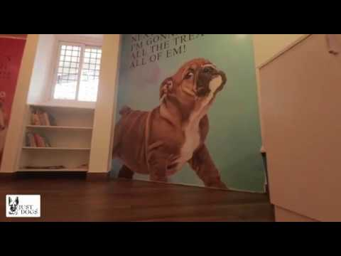 #petstore-#petshop-#dogfood-just-dogs--church-street-&-victoria-layout