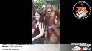 Затейник орангутан как следует потискал туристку за грудь