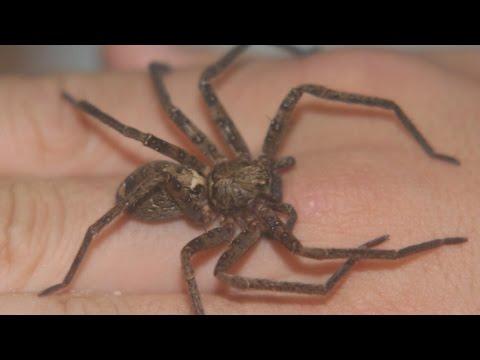 を 食べる クモ ゴキブリ ゲジゲジはゴキブリを食べる!でもゴキブリ対策としてはちょっと…… 生活110番ニュース
