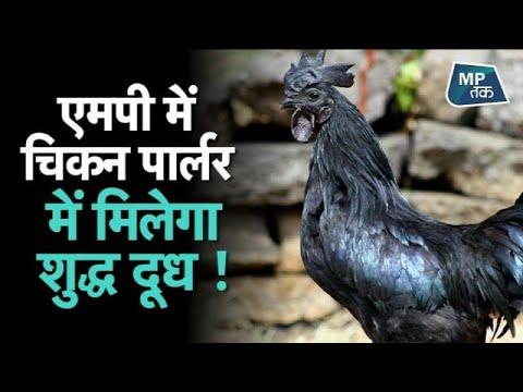 कमलनाथ सरकार का ऐसा अभियान, कड़कनाथ का मांस और शुद्ध दूध के लिए एक दुकान ! MPTAK