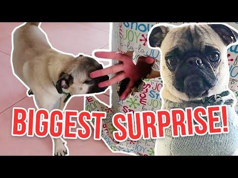 PUPPY BIG SURPRISE!