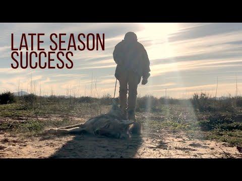 COYOTE HUNTING – Late Season Success