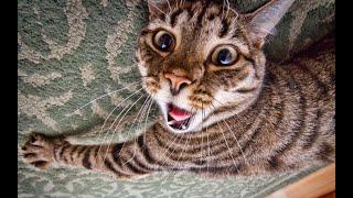 Я ржал до слез, ведь это смешные животные и коты 2019!!! №12 / Видео