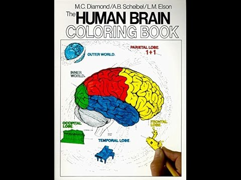 PDF The Human Brain Coloring Book Cos