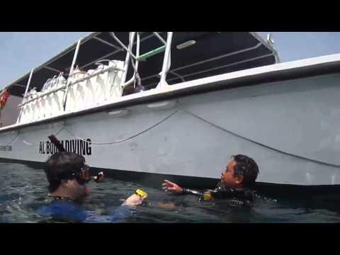 Diving in shark island and martini rock in Fujairah UAE