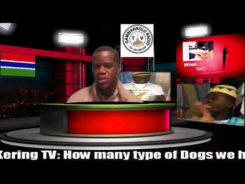 Types of Dogs in Gambia