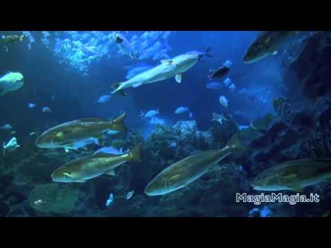 Acquario virtuale e musica rilassante