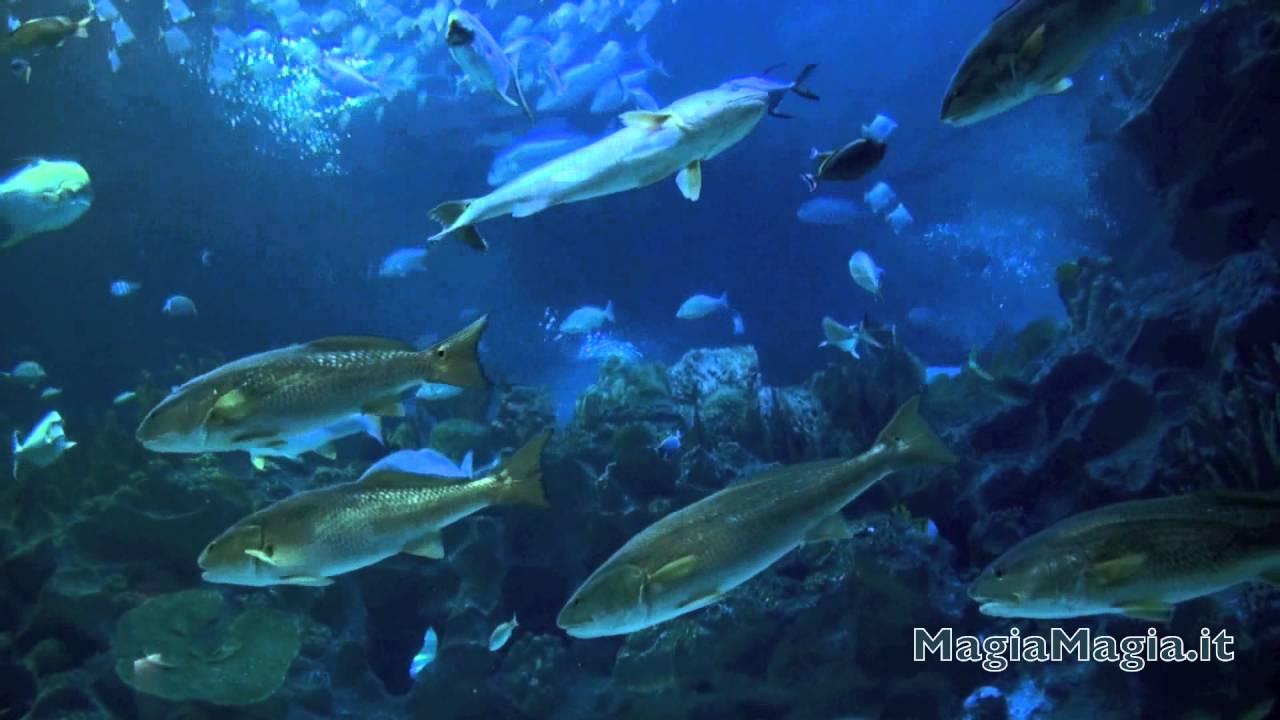 Acquario virtuale e musica rilassante youtube for Acquario acqua salata