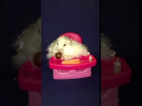 Cute hamster sitting in highchair