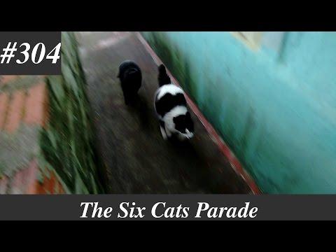 cool pet cats