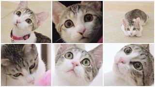 NyankuruTV Vol.14  にゃんくるTV Vol.14 【かわいい猫カフェ/保護猫】【Cute Cat Cafe】