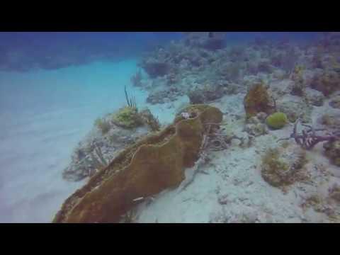 Antigua 5/13/17 Tank 1
