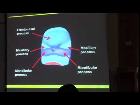 2) Dr.Doaa 16/2/2015 [ Derivatives of clefts, pouches and Development of face]