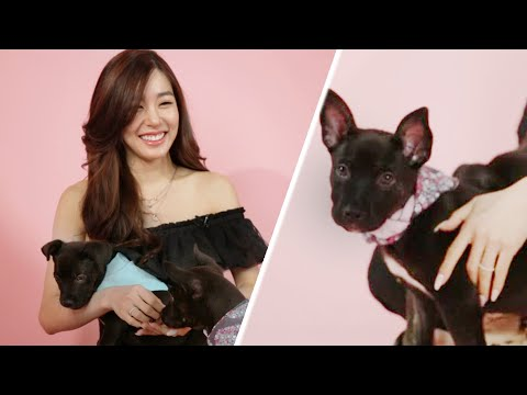 download Tiffany Young Plays With Puppies While Answering Fan Questions