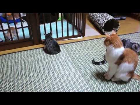 チワワの歯みがき用のボーンを欲しそうに見る子猫(おはぎ)です。