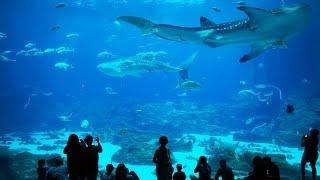 Georgia Aquarium Atlanta GA Aug 2015 4K UHD