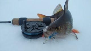 Окунь на балансир в глухозимье Рыбалка на окуня на Рыбинском водохранилище со льда