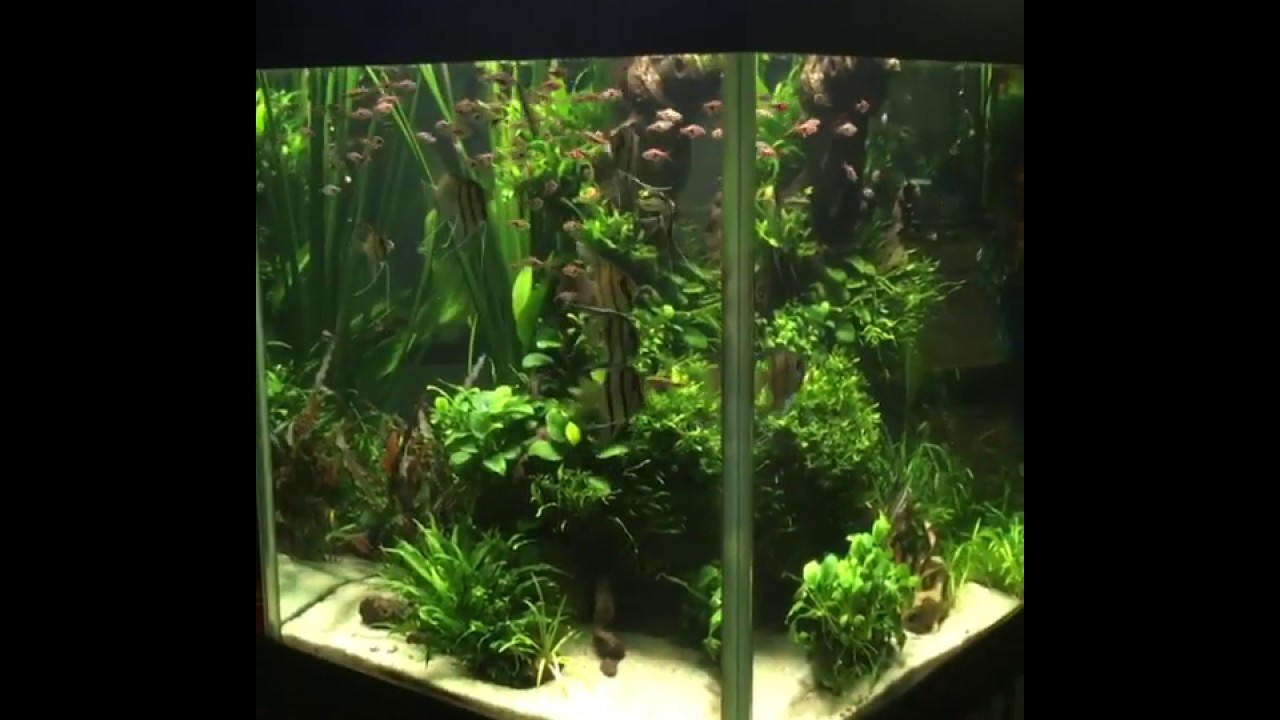Aquascape inspiration - YouTube