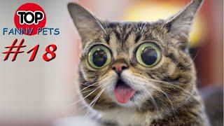 5 МИНУТ СМЕХА, ПРИКОЛЫ 2019, ТОП СМЕШНЫХ ВИДЕО С КОТАМИ/Смешные животные/TOP FUNNY PETS #18