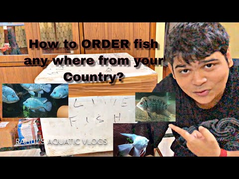 How To BUY Fish Anywhere In INDIA? || Ordered NEW Fishes!