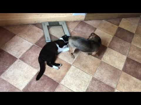 Dog vs Cat, Mortal COMBAT! Who is going to win?