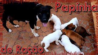 Fiz papinha para os Filhotes - Pets Na Net
