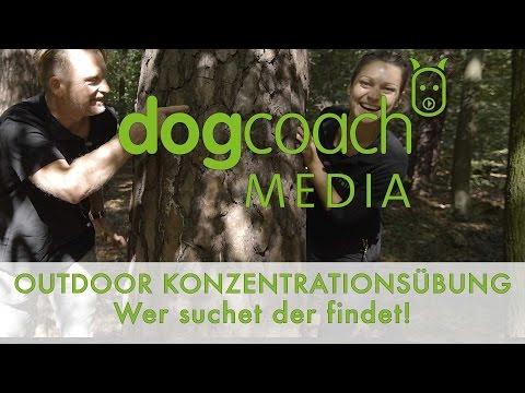 Hundetraining | Outdoor Konzentrationstraining - Wer suchet der findet!