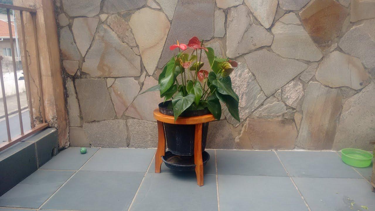 Bolitas de gel en planta leroy merlin of plantas for Plantas de interior leroy merlin