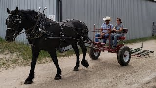 Best Way to Learn Draft Horse Wagon Cart Carriage Driving