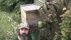 Massive Honey Bee Swarm! (Live Bee Rescue)