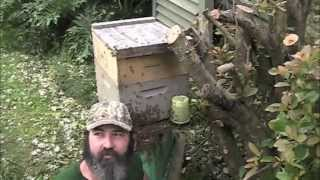 Massive Honey Bee Swarm! (Live Bee Rescue).mp3