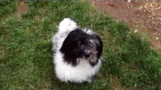 Dog Training Agility Basics - Watch Me, Stay, Go On