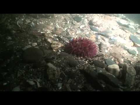 Diveworld Videos | pembrokeshire movie
