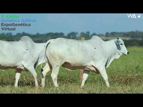 LOTE 33 - DUPLA - REMC A2218, REMC A 2267 - 3º Leilão Genética Aditiva Expogenética 2020