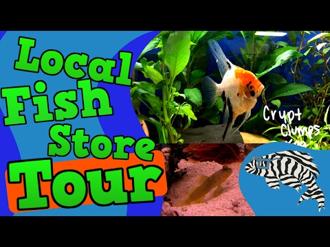 Local Fish Store Tour! Monfort Aquarium And Pets