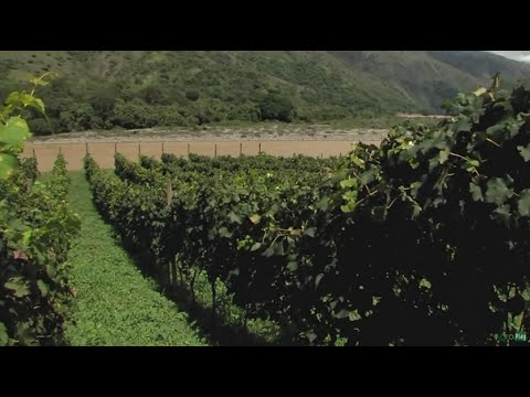 wine article Producing Wine at Cauca River Shores in Colombia  TvAgro by Juan Gonzalo Angel