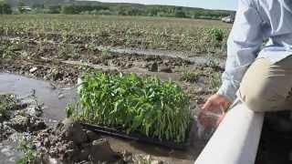 Sutherland Farms Chile:   Plant - Grow - Harvest