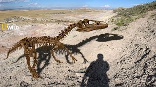 National Geographic Documentary - Fossils of dinosaurs - Natural secrets