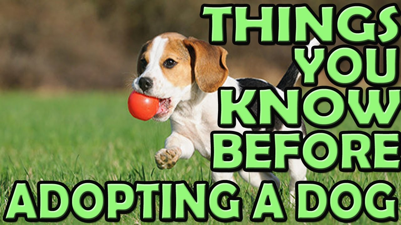 things i wish id known about adopting a dog tips for adopting a dog from a shelter youtube. Black Bedroom Furniture Sets. Home Design Ideas