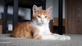 Fostering a CAT for the First Time (very cute)